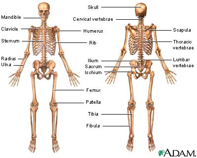 Picture The Skeletal System With Label Printable